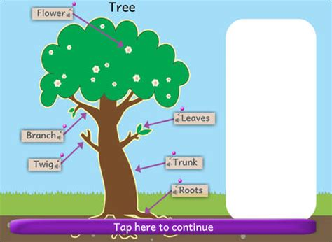 naming parts of plants and animals review | educational