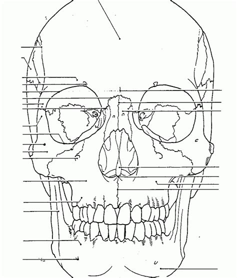 human skull coloring page anatomy coloring book tumblr free pages of labeling body