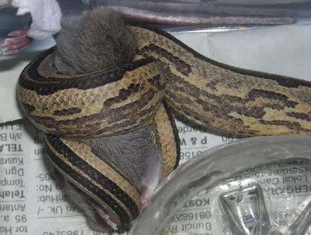 eat pensil reptile home