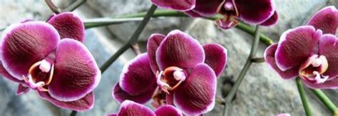 fiori di bach torino erboristeria la felce prodotti erboristici