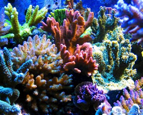colorful coral reefs screensavers for iphone wallpaper