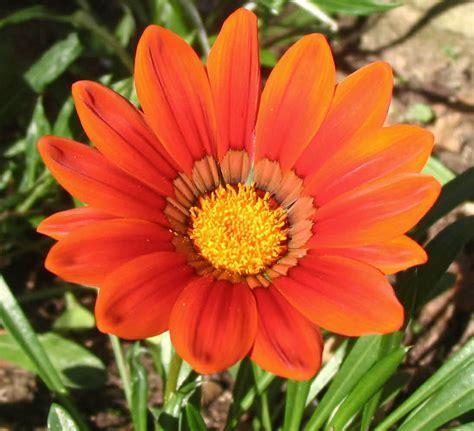 della fiore marco pellacani