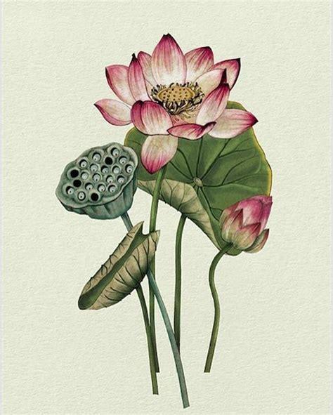 watercolor lotus tutorial best 20 flower drawing tumblr ideas on pinterest pretty