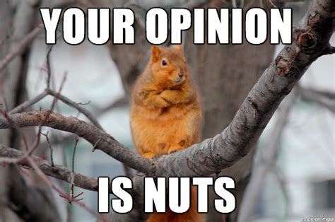 Squirrel Nuts Meme - 20 very funny drunk images and photos