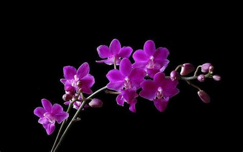 small purple flowers 1280x800 wallpaper purple flowers quotes 21 cool hd wallpaper