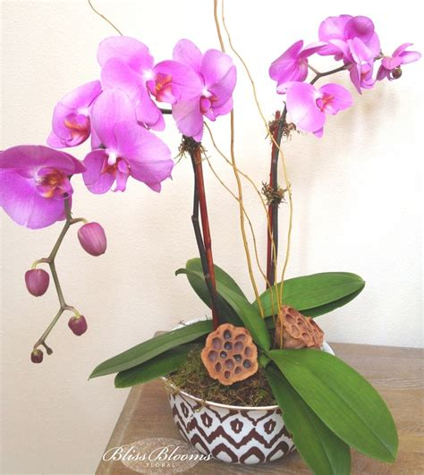 orchid care texas gardening pinterest