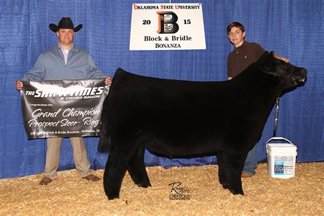 jake paul breed jake paul perryman of oklahoma monopoly steer getting ready for american royal market