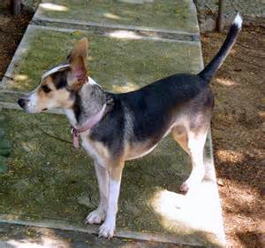 dogs that dont shed small medium and large breeds
