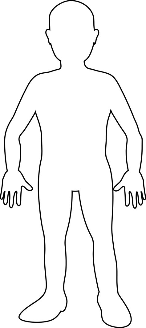 Human Form Outline Free by Blank Outline Of Human Anatomy Organ
