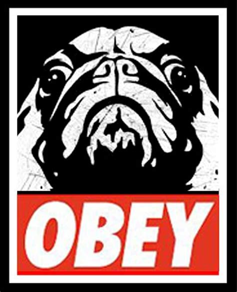 obey the pug obey the pug humans no chance pug
