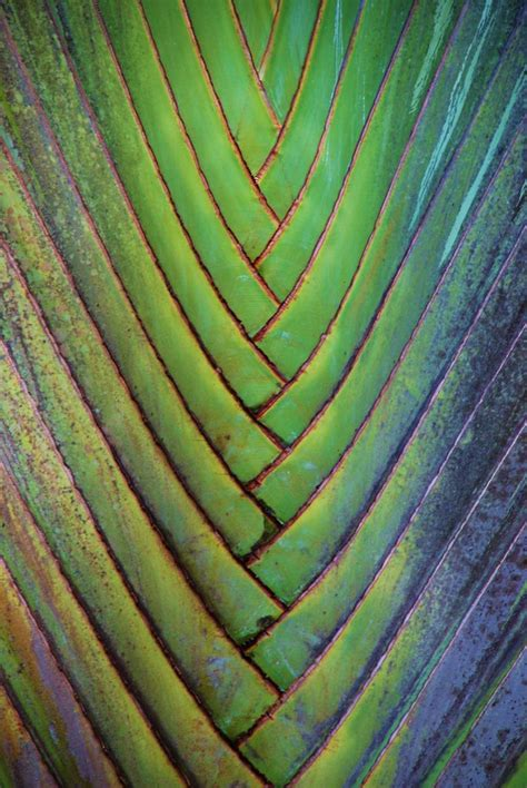 Texture And Pattern In Nature | pin by janeth rodriguez ospina on ideas pinterest
