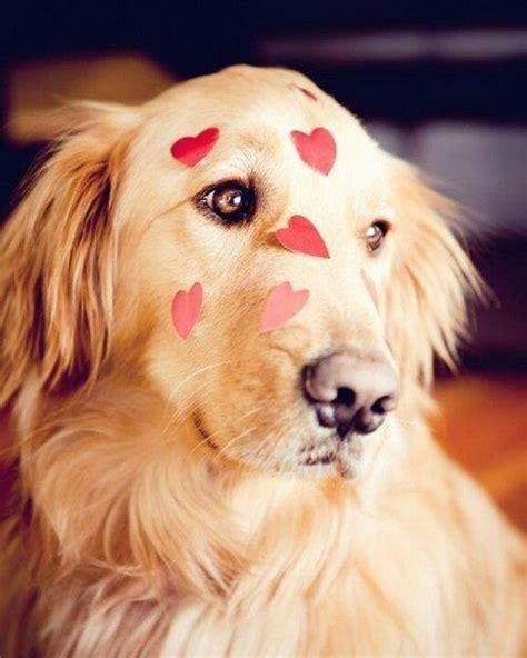 puppy valentines kisses puppy
