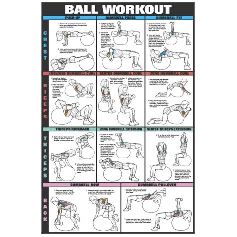 bicep and tricep workouts dumbbells eoua