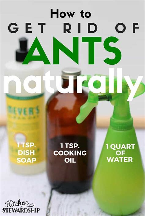 naturally  rid  ants   house safe diy