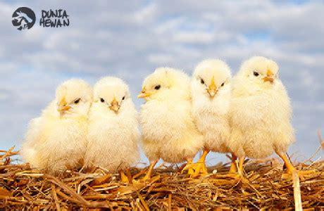 Obat Cacing Sanbe dunia hewan 085645958812 jual alat kesehatan