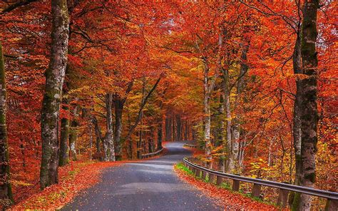 autumn trees road sweden wallpapers autumn trees