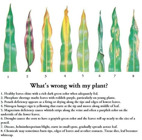what is wrong eith ann aldred whats wrong with anne 141 best images about house plants on pinterest plants