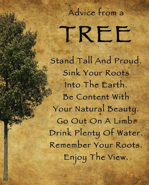 tree quotes advice from a tree inspirational picture quotes
