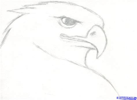 how to draw a realistic step by step how to draw a eagle step by step for beginners