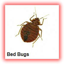 fumigation for bed bugs fumigation for bed bugs bed bug treatment in ikeja lagos