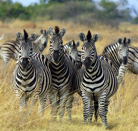 22 contoh gambar hewan beserta penjelasan referensi ku