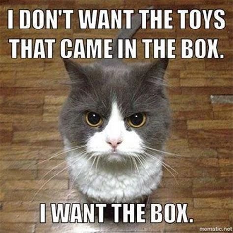 Popular Cat Memes - 36 funny cat memes that will make you laugh out loud