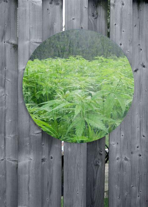 increase cannabis yields  reflective walls grow weed