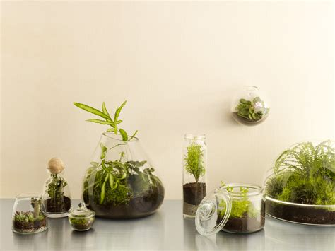 Handmade Terrariums - 8 cool diy terrariums sunset magazine