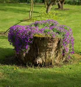 tree stumps turned into beautiful flower planters