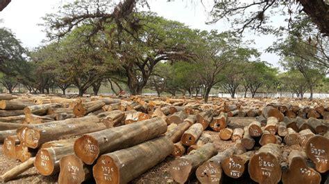 Lemari Kayu Sengon kayu jati sengon accasia lainnya tersedia disini potp