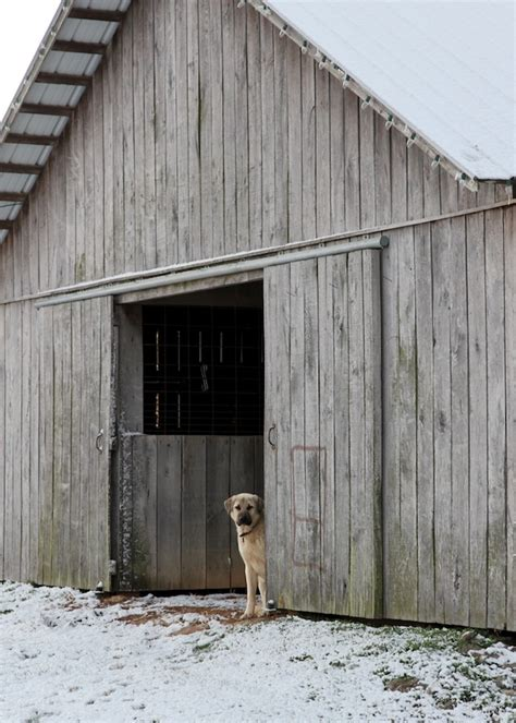 Dog Barn by Dog In Barn Look Look At The Barn Pinterest
