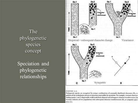 the phylogenetic species concept species concepts ppt video online download