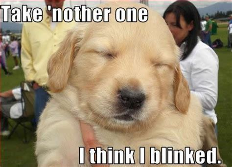 Cute Puppies Meme - 17 best images about dog memes on pinterest runners