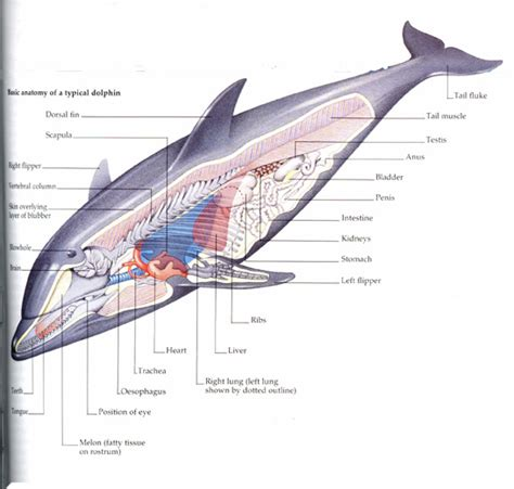 diagram of a dolphin 301 moved permanently