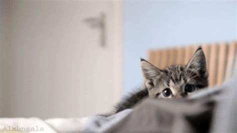 photography funny cats gif | wifflegif