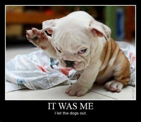 Funny Meme Dog - funny dog memes