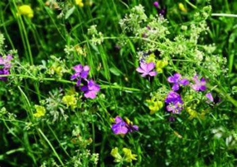 Rasen Sähen Wann 5628 by Wie Bek 228 Mpft Moos Im Rasen Unkraut Moos Hexenringe Im