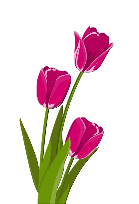clipart photo tulips illustration clipart free stock photo
