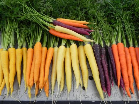 pictures of carrots what is functional nutrition josh gitalis