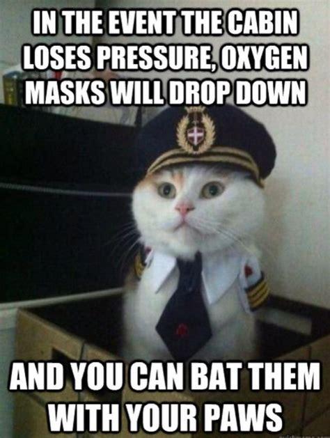 Cat Internet Meme - feline airlines beheading boredom