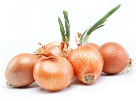 iv 83net jp onion img tag converter onionpimpandhost ru onion