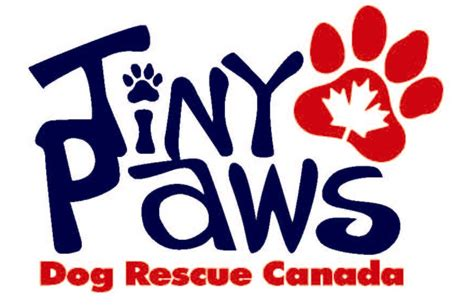 tiny paws small rescue tiny paws rescue canada pet rescue pets listed