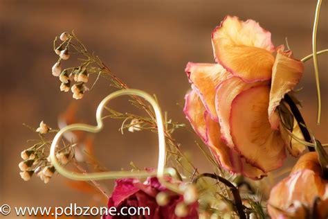 fiore immagine fiore e cuore foto immagini piante fiori e funghi