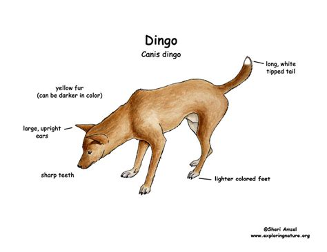 dingo diagram dingo partners with pethub to bring digital pet id