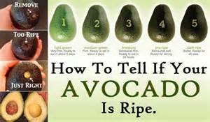 avocado chefmarilu
