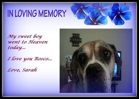 Animal Rescue Tribute by A Tribute To Rosco Saving Pets One At A Time Animal