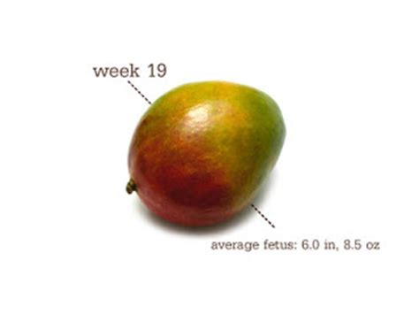 fruit 21 weeks 21 weeks fruit related keywords suggestions