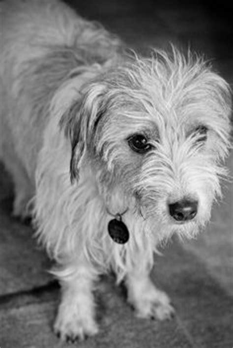 My precious Cooper, the Schweenie (half dachsund, half