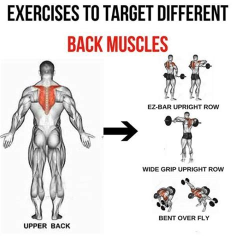 back exercises to target different back muscles 3 bodybuilding exercise back