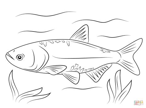 Carp Fish Coloring Pages | bighead carp coloring page free printable coloring pages